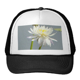 Water Lillies and dragonfly Hats