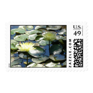 Water Lillies Postage