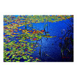 Water Lillies Posters
