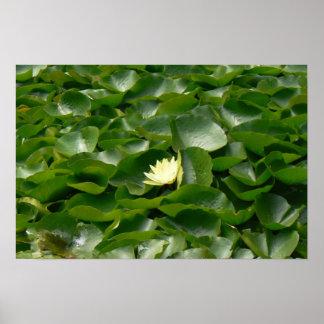 Water Lillies white green Print