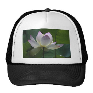Water Lilly 1 Mesh Hats