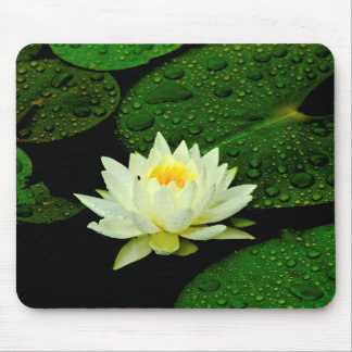 Water Lilly after the rain Mouse Pad