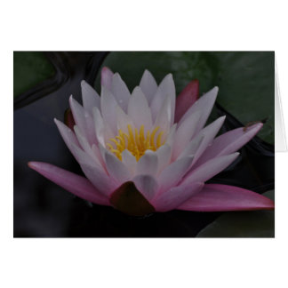 Water lilly stationery note card