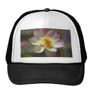 Water Lilly Flowers Hat