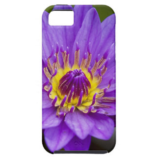 Water Lilly iphone 5 case