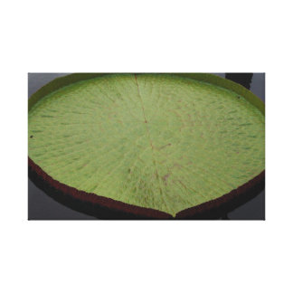 Water Lilly Leaf Wrapped Canvas