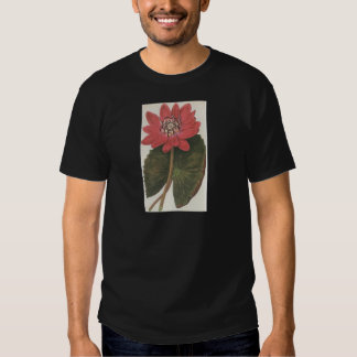 Water lilly Nymphaea Rubea Tshirts