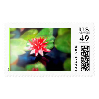Water Lilly Postage Stamp