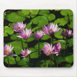 Water Lillys ~ Mouse Pad