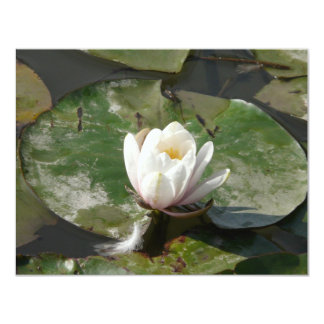water lily 1 card