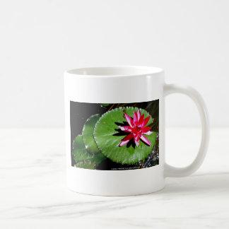 WATER LILY 1 COFFEE MUG