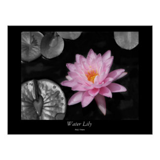 Water Lily - 1 Poster