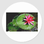 WATER LILY 1 STICKERS
