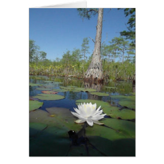 Water Lily 2 Greeting Card