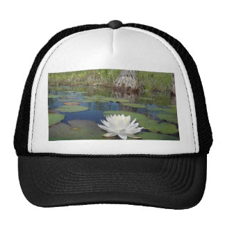 Water Lily 2 Hats