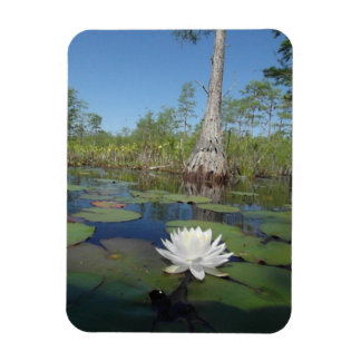 Water Lily 2 Rectangular Magnet