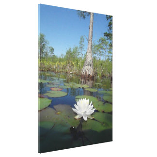 Water Lily 2 Stretched Canvas Print