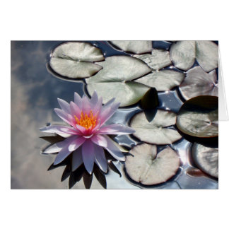 water-lily-322 card