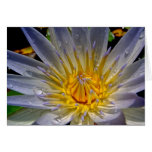 Water Lily After the Rain Greeting Card