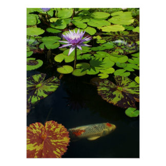 Water Lily and Koi Poster