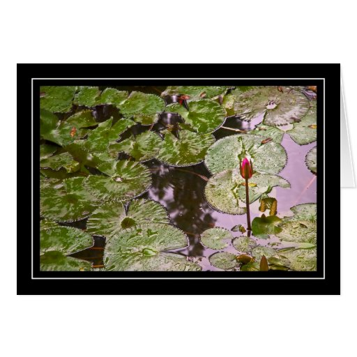 Water Lily and Lily Pads Card