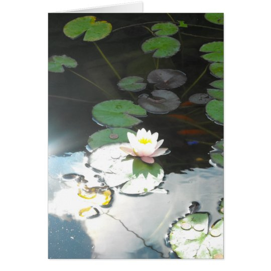 Water Lily and Sun Card