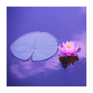 Water Lily at Dawn Canvas Print