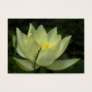 Water Lily ATC Card