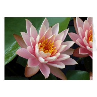 Water Lily Beauty Card