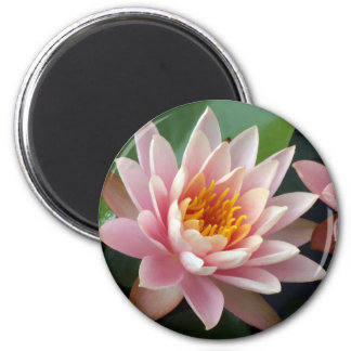 Water Lily Beauty Magnet