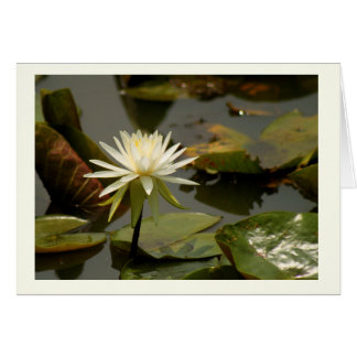 Water Lily Birthday card