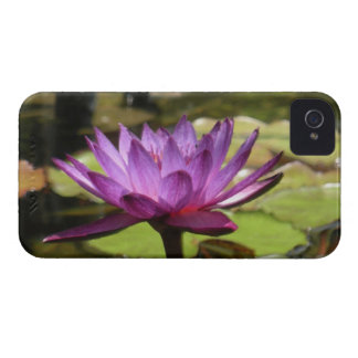Water Lily Blackberry Bold Case