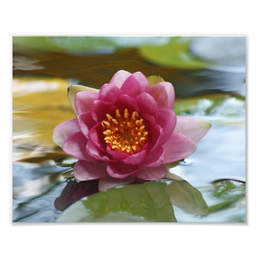 Water Lily Bloom Photographic Print
