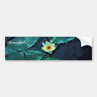 Water Lily Car Bumper Sticker