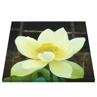 water lily gallery wrapped canvas