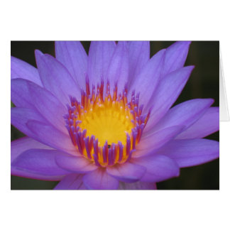 Water lily card