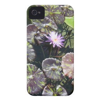 Water Lily iPhone 4 Covers