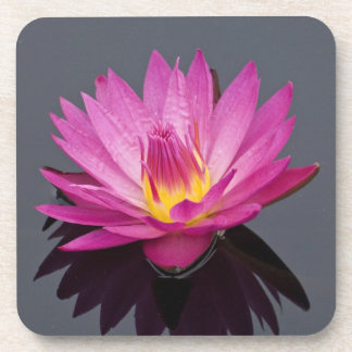 Water Lily Coasters