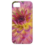 Water Lily Dahlia iPhone 5 Case