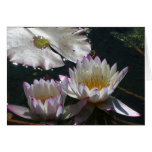 Water Lily Duet Greeting Card