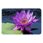 Water Lily Flexible Magnet