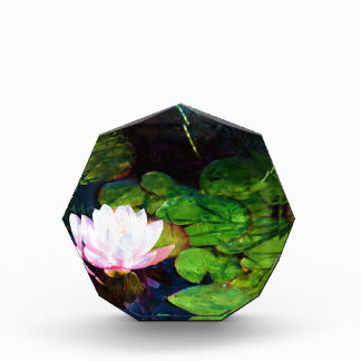 Water lily floating in a pond acrylic award