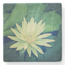 Water Lily Flower Green Stone Coaster