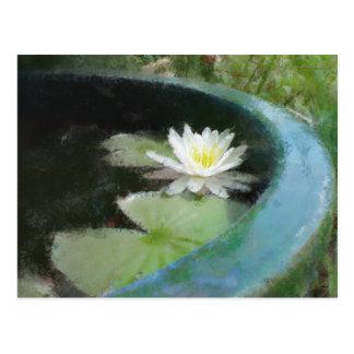Water Lily Gift Range Postcard