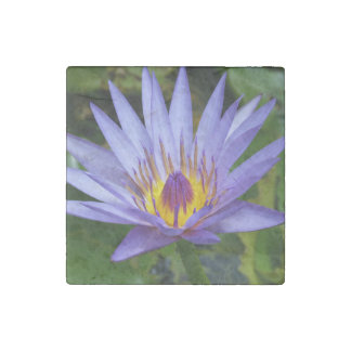 Water Lily Stone Magnet