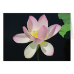 Water lily greeting card2 card