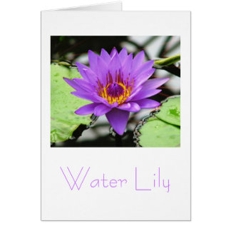 Water Lily Greeting Card Design