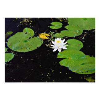 Water lily Ile du Marais Ste-Catherine-de-Hatley Custom Announcements
