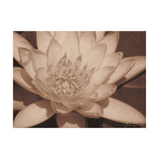 Water Lily in sepia tone Canvas Print