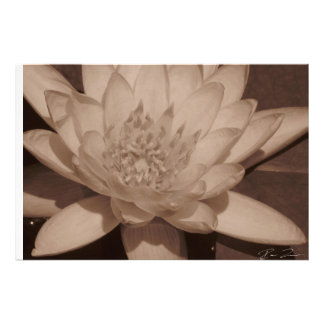 Water Lily in sepia tone Photo Art